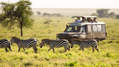 African Wildlife Tours and Safaris